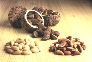 Brazil Nuts form the basis for everything Candela Peru offers