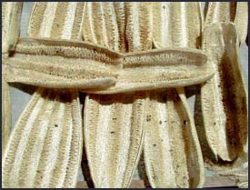 Loofah Drying