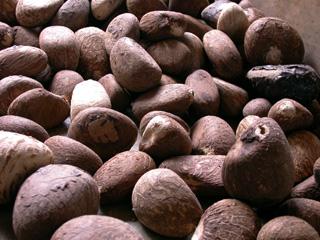 Many Tagua Nuts